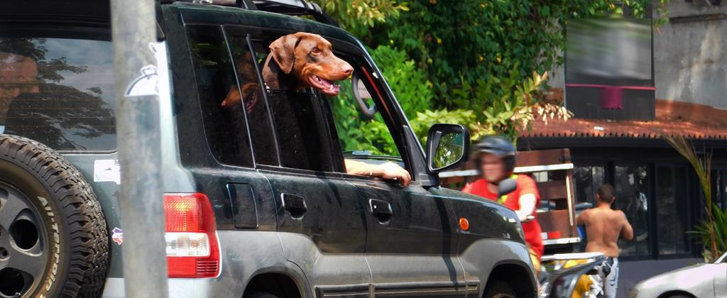 Conducir con su mascota le costaríauna multa de más de ¢100 mil