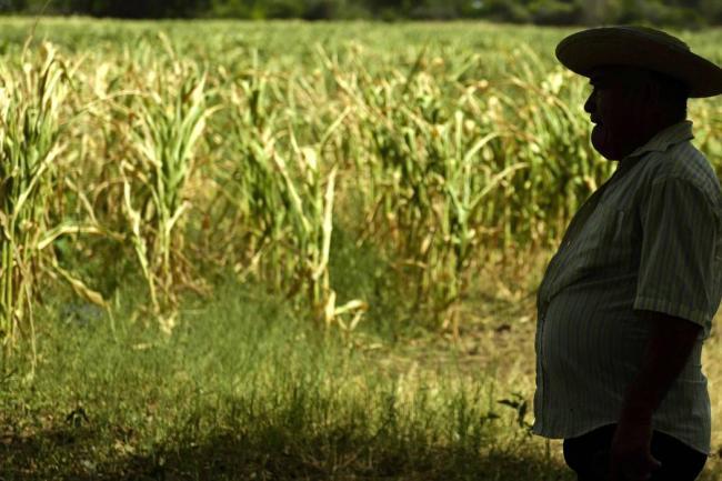 Según estudios, los agricultores han experimentado un aumento del estrés y consumo de drogas y alcohol a consecuencia de la afectación del cambio clim