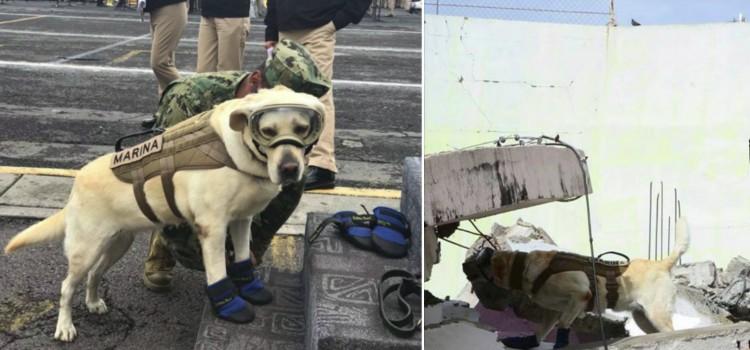 Frida se convirtió en toda una heroína, tras el terremoto que sacudió México en setiembre del año anterior.