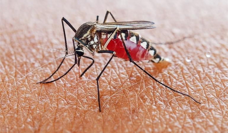 Costa Rica destaca a nivel internacional por su lucha contra la malaria
