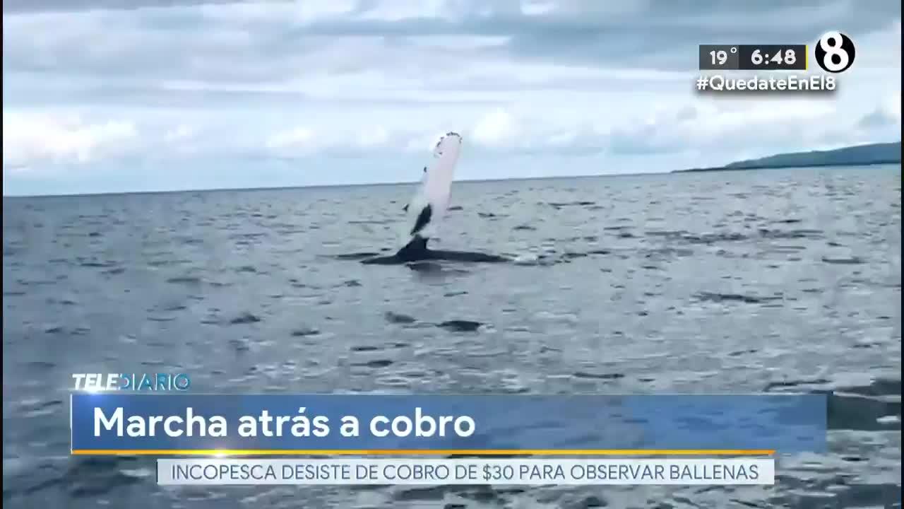 Incopesca suspende cobro de carné para observar ballenas