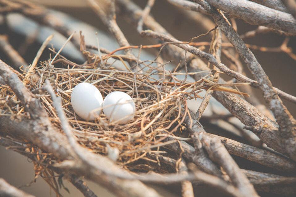 Las aves que, entre las ramas de sus nidos, incorporaron pequeños pedazos de plástico. (Foto: Referencia / Freepik)