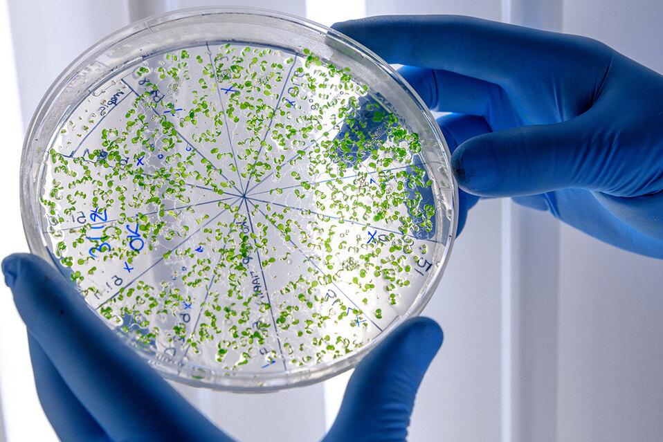 Las bacterias procariontes y las archeas son otras especies que sobrevivirán. (Foto: Referencia / Freepik)