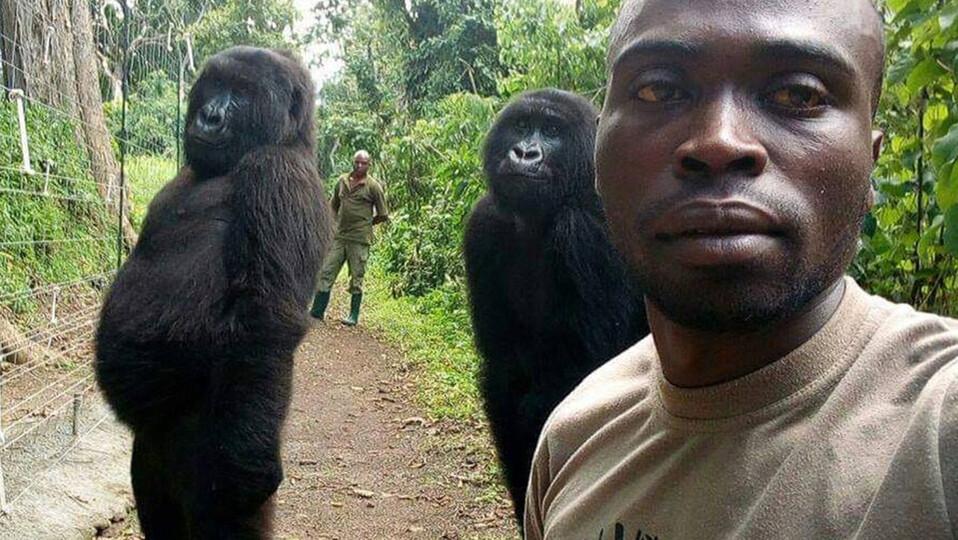 Muere gorila huérfana que conquistó la Red