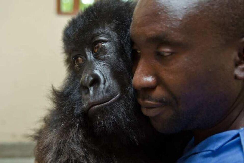 Ndakasi junto a Andre Bauma, cuidador que la rescató